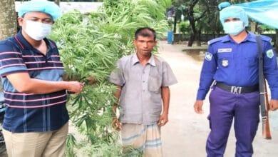 Photo of নওগাঁ গাঁজার গাছসহ একজন আটক
